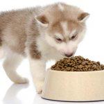 Az Ecopet száraztápok és a folyékony táplálék fontossága a kutya életében
