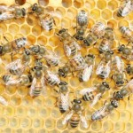 Miért szuperélelmiszer a méhpempő?